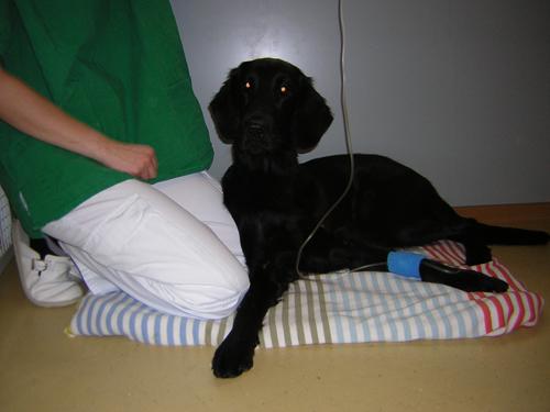 Tierarzt Frankfurt Bornheim